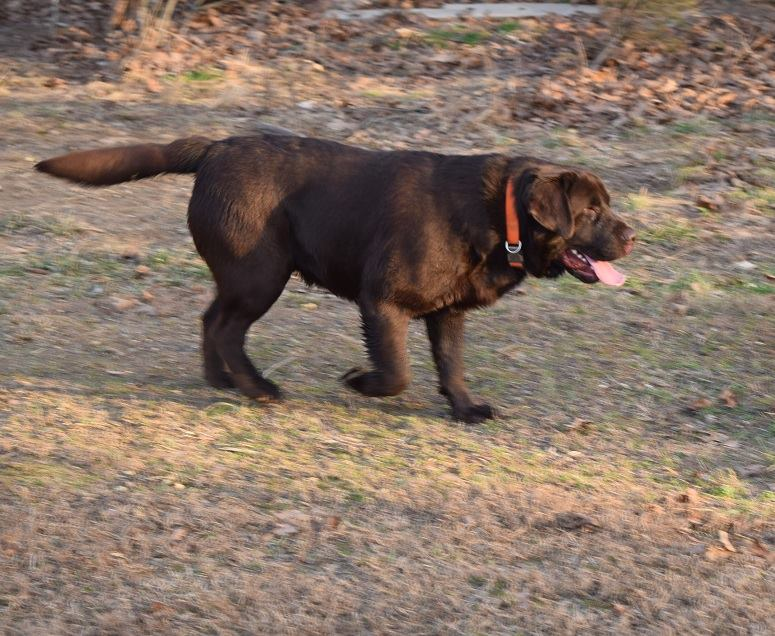 Tree Line Kennels | The most beautiful Rottweiler and